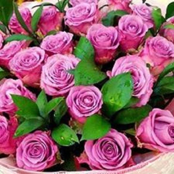 в-света-на-розите