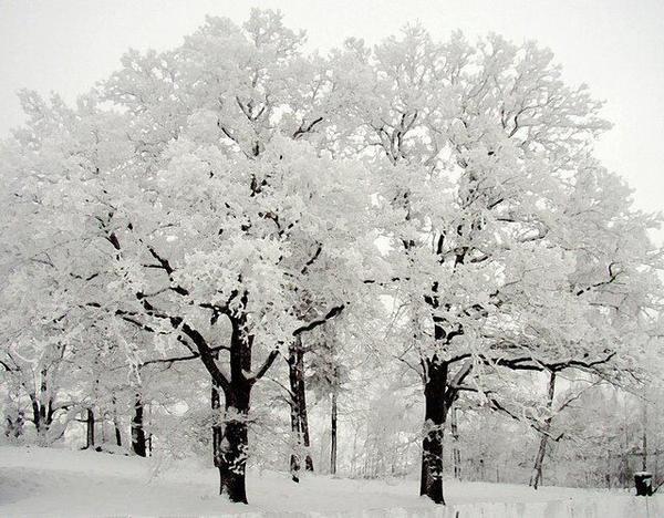 Красотата на зимата!!!2